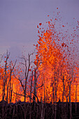 Hawaii, Big Island, Hawaii Volcanoes National Park, Pu'u O vent rift eruption, burned trees