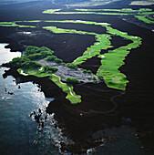 Hawaii, Big Island, Kohala Coast, Francis I'i Brown Golf Course, South Course, #6, 7, 8 Holes, aerial view