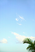 Abstract perspective of coconut palm trees and blue sky