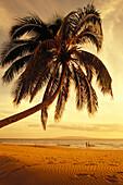 Hawaii, Maui, Kamaole beach, at sunset, two women walk along shoreline distance, palm tree foreground