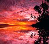 [DC] Hawaii, Molokai, Pink purple orange sunset with silhouetted palms, reflections C1582