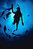 Hawaii, Silhouetted diver and reef fish, view from below, sunburst