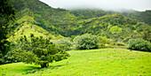 Hawaii, Kauai, Scenery along Makaleha Trail.