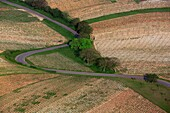 France, Cher (18), the Sancerre vineyards, AOC wine, wine route with graphics, (aerial photo)