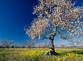 Woman sitting under blooming almond tree, Majorca, Spain
