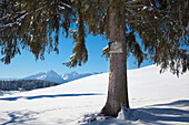 Wayside cross on a spruce tree, view to the Allgaeu Alps, Allgaeu, Bavaria, Germany