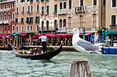 Yellow-legged Gull, Larus cachinnans, Gondola and restaurant at the Grand Canal, Venice, Venetia, Italy, Europe