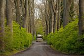 Allee of ash trees, Dortmund, North Rhine-Westphalia, Germany