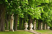 Allee of chestnut trees, Nordkirchen castle, Munsterland, North Rhine-Westphalia, Germany