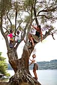 Kids climbing an old tree near Hotel Sipan, Sipanska Luka, Sipan island, Elaphiti Islands, northwest of Dubrovnik, Croatia