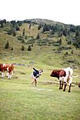 Woman taking pictures of herself and a cow, alpine pasture at Gastein valley, Bad Gastein, St. Johann im Pongau, Salzburg, Austria