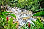 Dunns river falls Dunn´s river falls, Ocho Rios, Jamaica, West Indies, Caribbean, Central America.