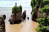 Canada, New Brunswick, Atlantic Coast, Bay of Fundy, Chocolate River, Hopewell Rocks.