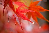 Fall colors brighten a cloudy, wet Seattle, Washington day