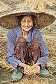 A beautiful 93 year old Chinese woman harvesting rice the traditional way with her hands just outside Guilin, China