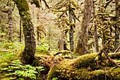 Chugach National Forest, Portage valley, Alaska, U S A