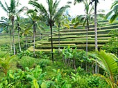 The Ubud Rice Terraces in Indonesia, a recent addition to the UNESCO WORLD HERITAGE certification