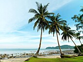 A tourist looks out to the ocean under palm trees on the coastal shores of Malaysia