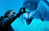A female tourist taking picture of Pacific white-sided dolphin at the Vancouver Aquarium, Vancouver, BC