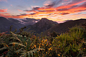 Impressive sunrise above the peaks of the Picos de Europa National Park with ferns and blossoming brooms in the foreground, Cantabria, Spain