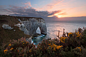 Picturesque sunset above the famous limestone arch Manneporte near Etretat with gorse shrubs in full bloom in the foreground, Normandy, France