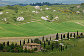 Crete Senesi, typical Tuscan landscape with clay hills and cypresses, Val d'Orcia, Orcia valley, UNESCO World Heritage Site, near Taverne d´Arbia, Province of Siena, Tuscany, Italy, Europe