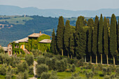 Country manor with olive trees and cypresses near Montalcino, province of Siena, Tuscany, Italy, Europe