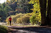 Young woman jogging through wood in autumn, Bavaria, Germany