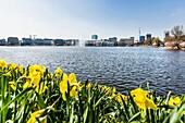 Binnenalster of Hamburg at springtime, Hamburg, Northern Germany, Germany