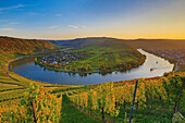 Horseshoe bend of the river Mosel at Kroev in the evening light, Rhineland-Palatinate, Germany, Europe