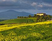 Homestead in a rape field, Pienza, Tuscany, Italy
