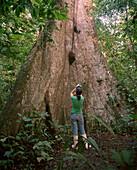 PERU, Amazon Rainforest, South America, Latin America, rear view of a woman taking photograph of a Kapok tree
