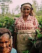 SRI LANKA, Asia, portrait of senior women in tea plantation field