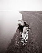 USA, Alaska, Inupiat woman and grandson by waters edge, Point Barrow (B&W)