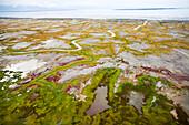 USA, Alaska, wetlands bordering the Gulf of Alaska