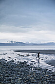 ALASKA, Homer, kid play by the edge of Kachemak Bay at Bishop Beach with the Kenai Mountains in the distance
