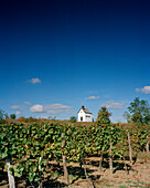 AUSTRIA, Oggau, a small chapel on a vineyard hilltop, Burgenland