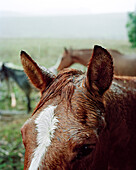 USA, California, close-up of a horse head in the rain, Hwy 1, Bolinas
