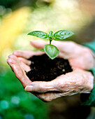 USA, California, close-up of human hands holding seedling