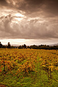 USA, California, vineyard landscape with a stormy cloudy sky, Bartholomew Park winery and vineyard