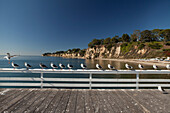 USA, California, Malibu, seagulls sit on a railing on the pier at Paradise Cove