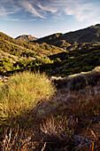 USA, California, Malibu, Charmlee Wilderness Park landscape