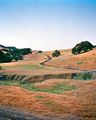 USA, California, Point Reyes Station, oak covered hillside landscape, Hwy 1