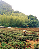 CHINA, Hangzhou, mid adult farmer working in field, Meijai Wu