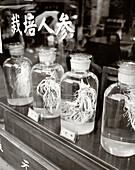 CHINA, Hangzhou, Chinese Ginseng herbs in bottles at dispensary
