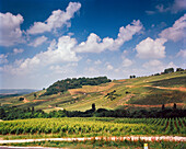 FRANCE, Franche-Comte, the vineyards of grapes grown to produce Vin Jaune, near Chateau Chalon in Eastern France, Jura Wine Region