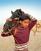INDIA, Rajasthan, camel cart driver with his camel, Pushkar Camel Fair