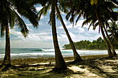 INDONESIA, Mentawai Islands, a shot through the palms of a surfer on a wave at Nipussi surf break