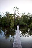 INDONESIA, Mentawai Islands, Kandui Resort, a small tsunami foot bridge through the mangroves, leading to higher ground