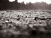 INDONESIA, Mentawai Islands, Kandui Resort, rain drops falling into the Indian Ocean (B&W)
